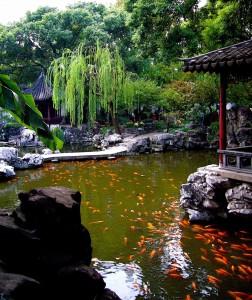 Mẫu hồ cá Koi truyền thống Nhật Bản 29
