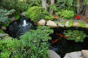 Mẫu hồ cá Koi truyền thống Nhật Bản 32