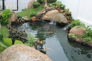 Mẫu hồ cá Koi truyền thống Nhật Bản 37