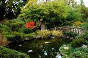 Mẫu hồ cá Koi truyền thống Nhật Bản 14