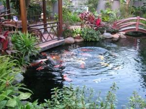 Mẫu hồ cá Koi truyền thống Nhật Bản23