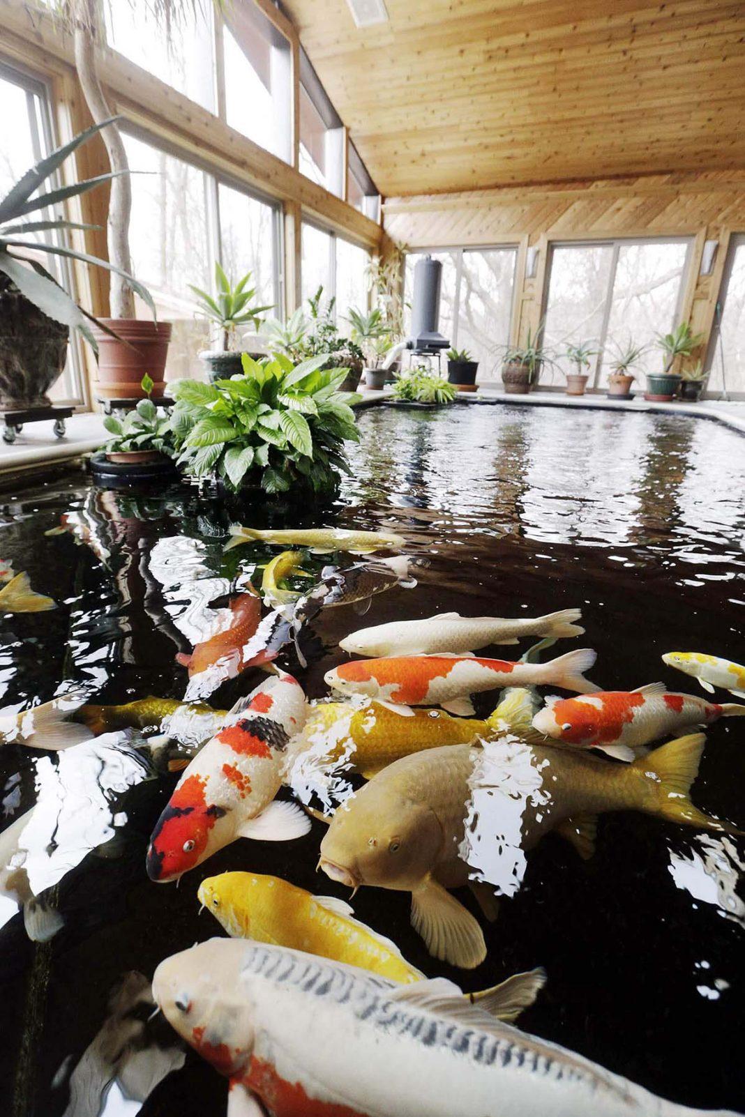 Mẫu hồ cá Koi hiện đại trong nhà 2