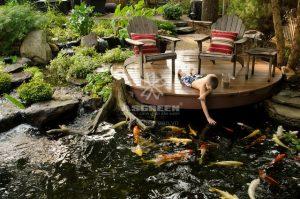 23 Mẫu hồ cá Koi đẹp từ các nước Asian 3