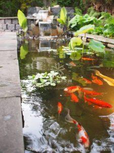 23 Mẫu hồ cá Koi đẹp từ các nước Asian 20
